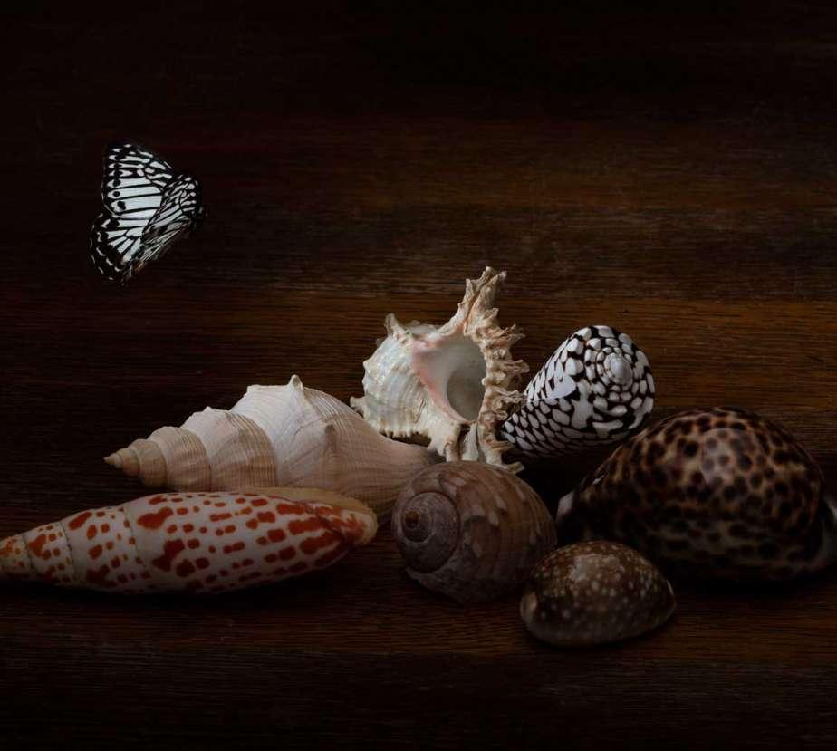 still-life-034_Ellena-Scheufler_muscheln und schnecken